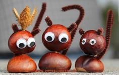 decoratiuni din ghinde si castane Acord and chestnut crafts 7