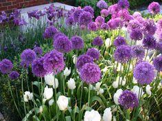 a copyright hendycurzon gardens ltd garden design & landscaping oxfordshire