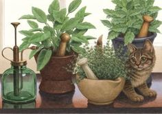 Herbal Kitten Pharmacy Art Print Item PF575 Captivating and detailed, the artwork created by Richard Cowdrey exclusively for eMedDecor is available in print form ready for the framing of your choice.  This little kitty is snooping among the herbs planted in the mortars.  Another heartwarming piece of art.