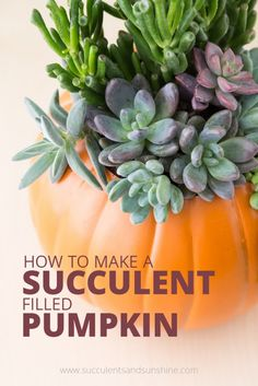 So cute! This succulent filled pumpkin is easy to make and will last for months!