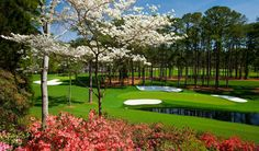 It's a beautiful week to be at the Masters!