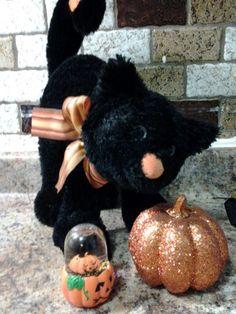 My fav black Halloween cat