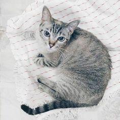 Miah, gatinha manhosa. Haha. . . . . . . . . . . . #tumbrl #tumbrlgirl #igers #igersbrasil #fashionista #fashionblog #fashionblogger #blogger #blogueira #modablogueira #kitty #kitten #littlecat #gatos #lovemycat #lambeijos #amorfelino #mycat #miau #vsco #vscocam