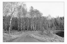 Birch by Anders Stangl on 500px