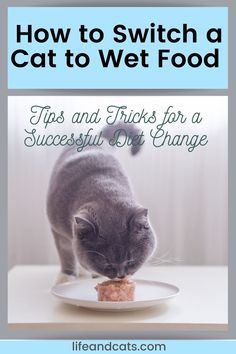 It can be a challenge to  transition your cat cat to a wet food diet but with patience, a few  tricks and some bribery you will succeed. Here are some tips for making a  successful switch. Healthy Cat Food, Best Cat Food, Dry Cat Food, Cat Care Tips, Pet Care, Cat Cpr, Cat Health Care, Cat Diet