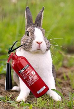 Hero Rabbit Saves Family From Fire