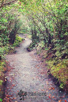 Alum Cave Bluff trail in Gatlinburg, TN - one of my most favorite trails - ever!!!
