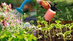 Trucchi e trucchetti dei giardinieri più esperti possono essere completamente sconosciuti alla maggior parte degli amanti del giardinaggio, e alcuni arrivano a sembrare addirittura pazzeschi