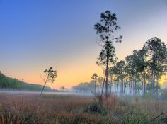 Corkscrew Swamp Naples, FL--been there--it is beautiful as you can walk on the boardwalk platform