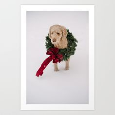 labradoodle in the snow wears a wreath for Christmas Art Print by Tara Romasanta - $24.99