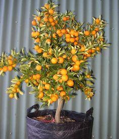 How to Prune Dwarf Fruit Trees