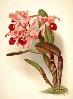 Орхидеи. Обсуждение на LiveInternet - Российский Сервис Онлайн-Дневников