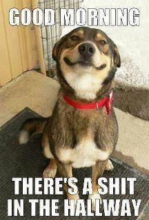 Check out: Animal Memes - Shit in the hallway. One of our funny daily memes selection. We add new funny memes everyday! Bookmark us today and enjoy some slapstick entertainment! Animal Memes, Funny Animals, Cute Animals, Animals Dog, Animal Fun, Funniest Animals, Animal Captions, Animal Humor, Animal Quotes