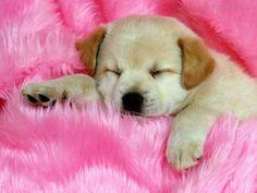 Imagem de dog, puppy, and pink
