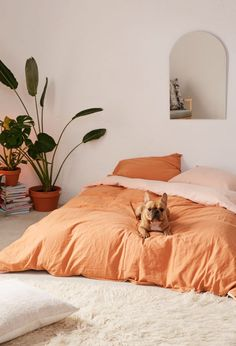 Orange sheets in a minimal bedroom Orange sheets in a minimal bedroom Bedroom Color Schemes, Bedroom Colors, Design Bedroom, Home Interior, Interior Design, Interior Ideas, Duvet Covers Urban Outfitters, Urban Outfitters Room, Bedroom Orange
