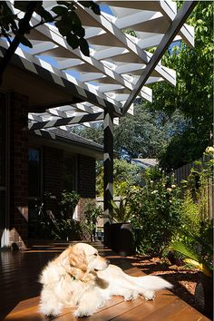 Rose Garden Origami - a garden pavilion in Melbourne. Photography by Nic Granleese