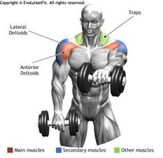 FRONT DUMBBELL RAISE - The exercise involves the forward part of the deltoids, it is fit for thedefinition of the muscle. Sport Fitness, Muscle Fitness, Fitness Workouts, Fitness Motivation, Free Fitness, Weight Training, Strength Training, Deltoid Workout, Workout Plans