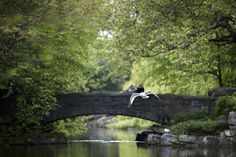 Bird flying at St. Bird Flying, Saint Stephen, Cliff, Dublin, Bald Eagle, Townhouse, Weddings, Green, Terraced House