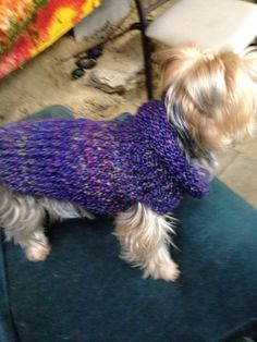 Dog sweater made with round knitting loom