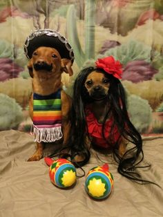 30 Amazing Pet Halloween Costume Ideas & 158 best Pet Halloween Costumes images on Pinterest | Homemade ...