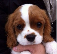 I couldn't have this dog because it would be impossible to say no