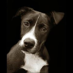 Moving portraits of dogs living in American shelters from Traer Scott.