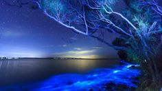 Phytoplankton cause the waters of Jervis Bay in Australia to appear like they're glowing. (Andy Hutchinson)