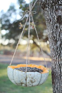 Bird feeder in a hollowed out squash! Fun idea for the fall... #birdfeeder