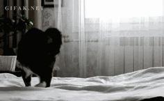 cat star wars