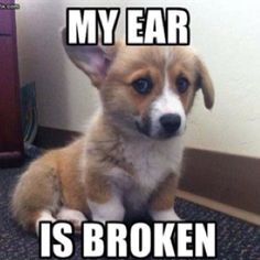 Daughters dog has ear like this and we call him Bentley.  :) :)