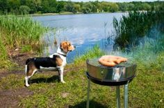 Great tips for camping with your dog!