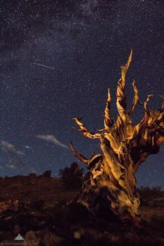 The Ancient Bristlecone Pine Forest contains the world's oldest known living non-clonal organism reaching ages of 5067 years old. Here is my story of when I visited there and had a wonderful encounter with a stranger. http://ift.tt/2Cq4APF