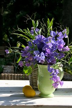 How to start a sweat pea trellis. How to start a sweat pea trellis. All Flowers, Fresh Flowers, Purple Flowers, Beautiful Flowers, Wedding Flowers, Bouquets, Pea Trellis, Purple Wedding Centerpieces, Pea Flower