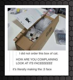 Box Of Cat
