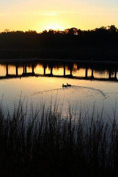 Bayview Dog Park in Pensacola @ Sunrise