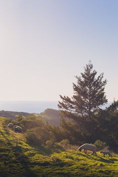 If you ever want to experience a private and lovely trip to the coast, take Coleman Valley Road — you won't regret it.