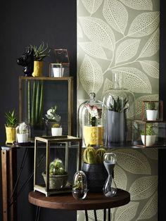 Lust auf einen Indoor-Garten? Dann schauen Sie mal, wie modern man Zimmerpflanzen arrangieren kann.Schöner SchaustellerBild oben: Wenn man