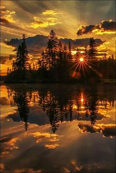 Trees & sunset.