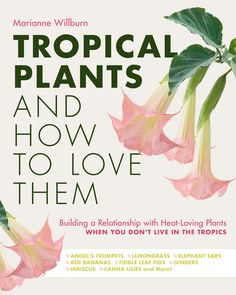 Tropical Plants and How to Love Them inspires readers to add exciting tropical accents to their temperate gardens with confidence and flair – awakening tired summer gardens and turning dull suburban patios into sophisticated, late-night destinations. Dyi, Best Friend Relationship, Canna Lily, Angel Trumpet, Gardening Magazines, Elephant Ears, Fiddle Leaf Fig, Friends With Benefits, Trumpets