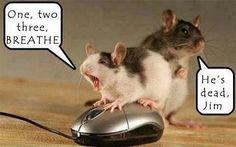 Tragik im Alltag:  Denke auch öfter nach, ob meiner Maus sowas helfen würde...