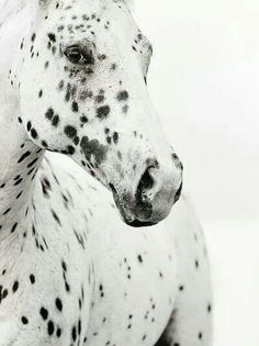 Beautiful horse ♥♥