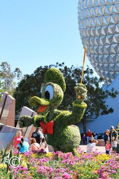 Donald Duck Topiary During the International Flower and Garden Festival in Epcot at Walt Disney World - Topiary Garden, Garden Art, Garden Ideas, Disney World Fl, Disney Parks, Epcot Florida, Disney Garden, Disney Theme, Disney Trips
