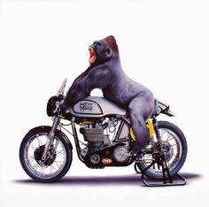Apes Riders Portraits – Fubiz Media