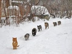 The Cat Trail   ...........click here to find out more http://googydog.com                               P.S. PLEASE FOLLOW ME IN HERE @Yulia Bekar Bekar watson
