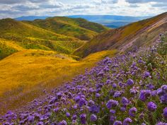 Carrizo Plain tavaszán, California