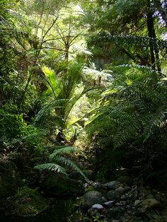 New Zealand - Bush - Waitakere Ranges Camping New Zealand, New Zealand Travel, Banff National Park, National Parks, Pickup Camping, New Zealand Holidays, Native Gardens, Bench Seat, South Island