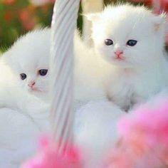 Precious kittens in a basket