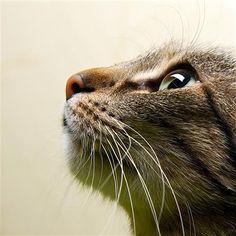 16 alimentos que podem matar o seu gato