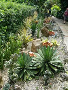 Agaves, succulents and cacti at Orchid World Barbados by garden muses-not another Toronto gardening blog
