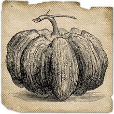 Pumpkin halloween Burlap Vegetable food image Digital by JLeeloo2, $1.00